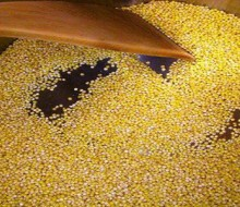 El mijo: cereal con alto contenido proteíco y vitamínico